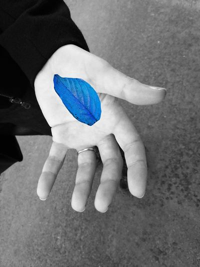 Lost And Found Blue Leaf Have You Seen My Leaf Human Hand Close-up