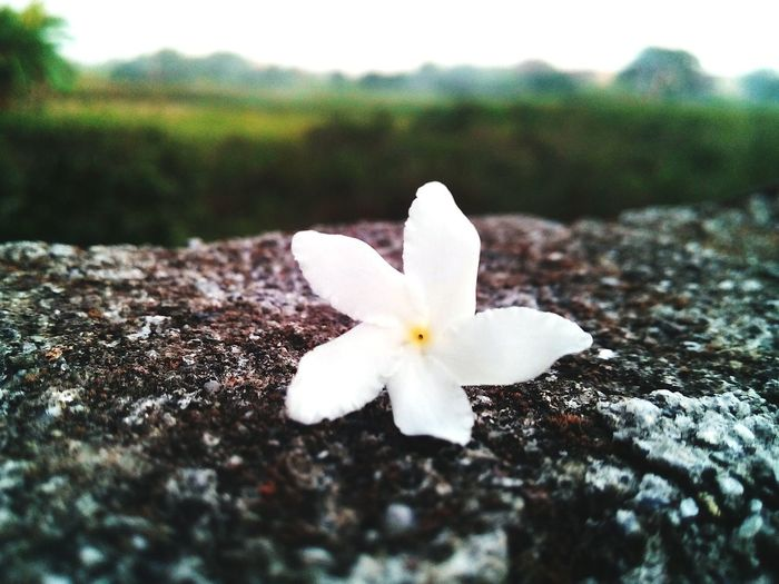 The flower. Closerview
