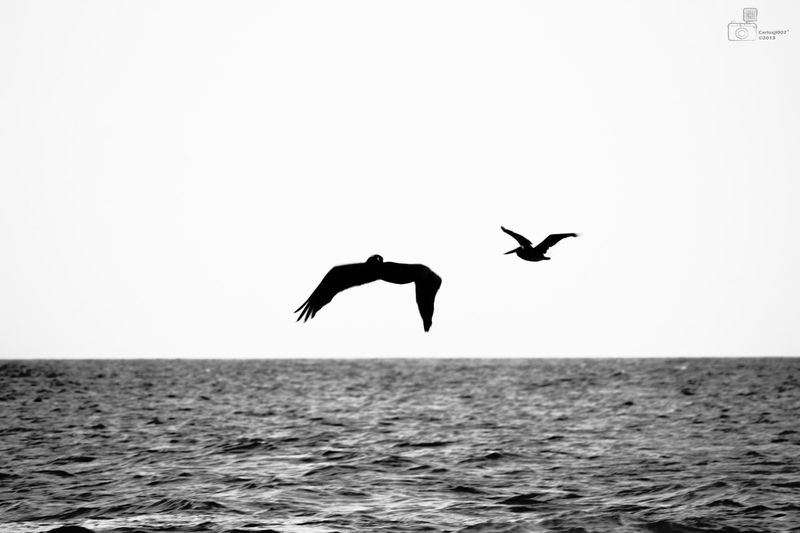Puntasal  Birds SeaBlackandwhite