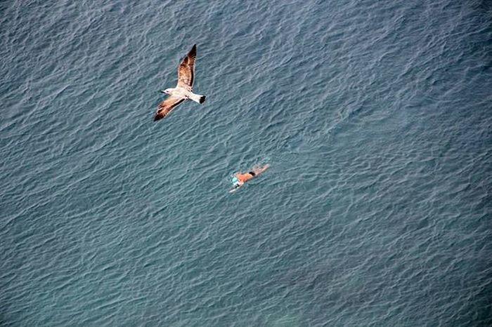 Bagnante Mare Sea Nizza Deti Seagull Pulebardhe Gabbiano Uccello Involo Nefluturim Persona Notar The Magic Mission Nature