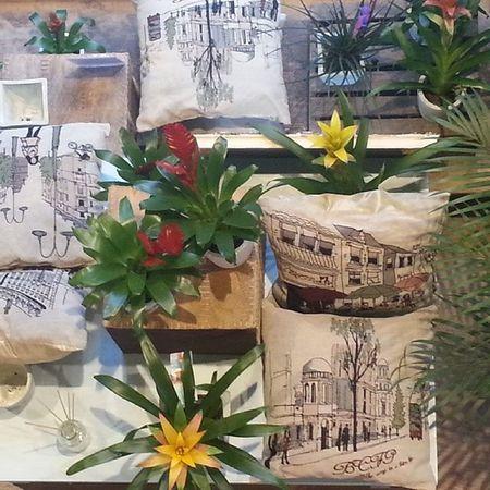 New display at Alea flores | concept store de urzaiz, 78 Vigo. Vigo Conceptstore Flores Flowers Déco Cosy Lifestyle Decoration Cojines Newcollection Nuevacoleccion Plants