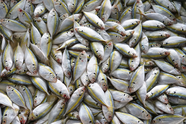 Yellow-stripe fish, fresh fish in the fish market Food Food And Drink Freshness Backgrounds Fish Healthy Eating Market Seafood Fishing Industry For Sale Raw Food Yellowstripe Fish Yellowstripes Yellow Stripe