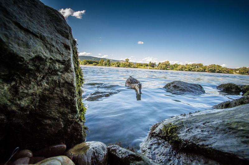 Danube Animal