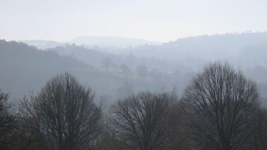 Fog Nature Mist