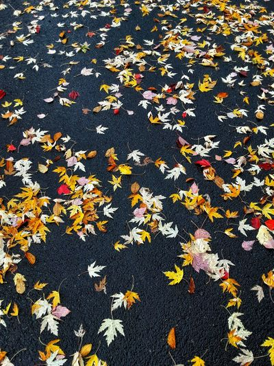 High angle view of autumn leaves fallen on plant