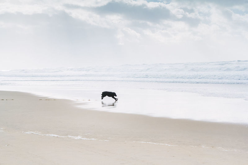 Adventure Animal Themes Beach Black Dog Day Dog Domestic Animals Flat Coated Retriever Horizon Over Water Hunting Dog Mammal Nature One Animal Outdoor Pursuit Outdoors People Retriever Sand Sea Sky Travel Destinations Wave