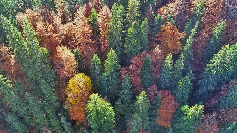 Aerial Photography Picea Abies Aerial View Aerial Shot EyeEm Forest Photography Nature Photography EyeEmNewHere EyeEm Best Shots EyeEm Nature Lover EyeEm Selects Autumn colors Forestphotography Forest Trees Multi Colored Backgrounds Full Frame Tree Pattern Close-up Green Color