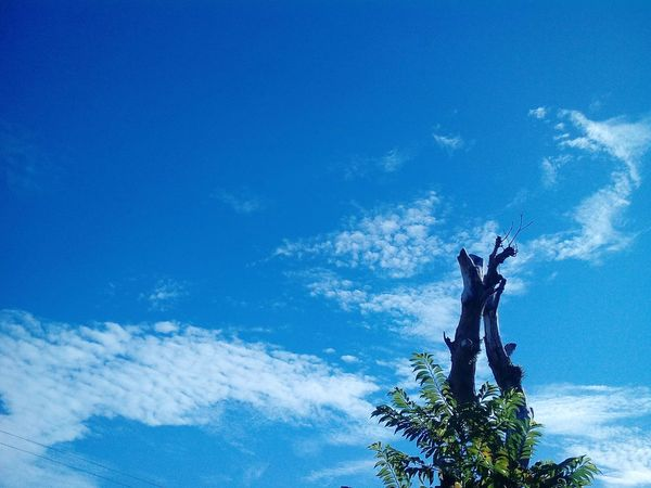 Sky Clouds Blue Outdoors Colors No People Visual The Photojournalist - 2017 EyeEm Awards Visual Feast Beauty In Nature The Street Photographer - 2017 EyeEm Awards Colorful Scenics The Street Photographer Philippines EyeEmNewHere Photography Mobilephotography Taking Photos Day BYOPaper! Photography Themes The Great Outdoors - 2017 EyeEm Awards Live For The Story