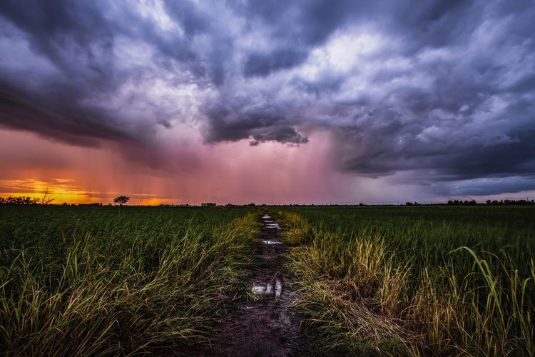 storm Sky Cloud - Sky Beauty In Nature Landscape Environment Scenics - Nature Field Land Nature Sunset Agriculture Growth Rural Scene Farm Plant Tranquility Tranquil Scene No People Crop  Dramatic Sky