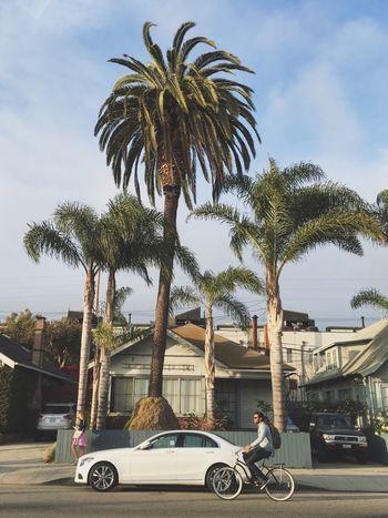 Los Angeles, California Abbot Kinney Street Streetphotography Fashion Trees