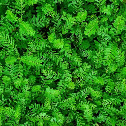 nature!🍃 Backgrounds Leaf Close-up Plant Green Color