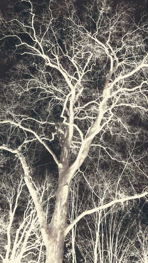 Beautiful inverted tree Tree Inverted Outdoors Nature Growing Black And White Plant Bare Tree Branch No People Tranquility Day Low Angle View Beauty In Nature Backgrounds Full Frame Dead Plant Land Winter Trunk Cold Temperature Tree Trunk Growth