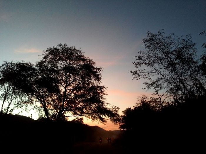 Cores Da Natureza Nature_collection Amoanatureza 🌇f🌇irst Eyeem Photo Tree Silhouette Tranquil Scene Tranquility Scenics Sky Sunset Beauty In Nature Growth Nature Non-urban Scene Outline Branch Dark Outdoors Day No People Majestic WoodLand Remote