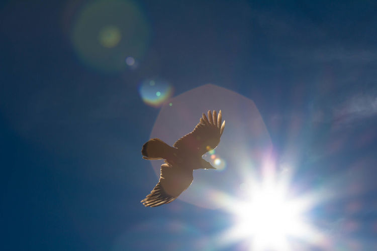 Close-up of bird soaring against blue sky