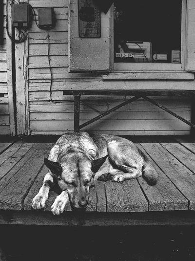 Sleeping Dog -