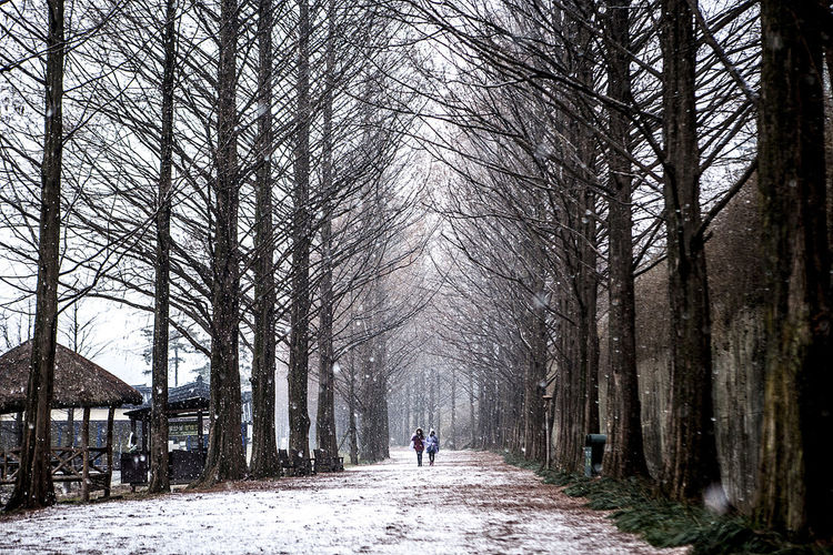 Damyang Metasequoia Road Damyang Metasequoia Korea South Korea Snowing Snow