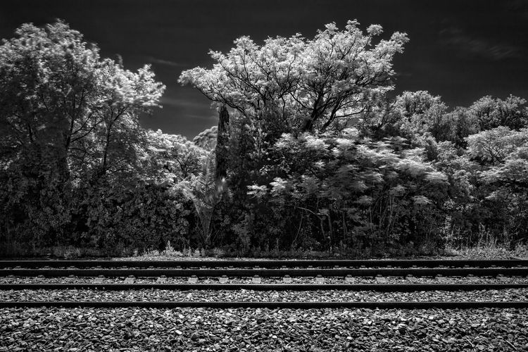 Infrared Trees Black And White Day No People Railroad Track