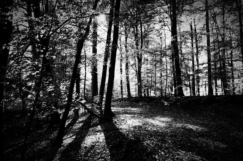 beauty in nature, black and white Beauty In Nature Sun In The Forest Blackandwhite Photography Autumn Light High Kontrast Light In The Forest Beauty In Nature, Black And White Blackandwhitephotography Full Frame Day Backgrounds Shadow Tree No People Outdoors Nature Sky