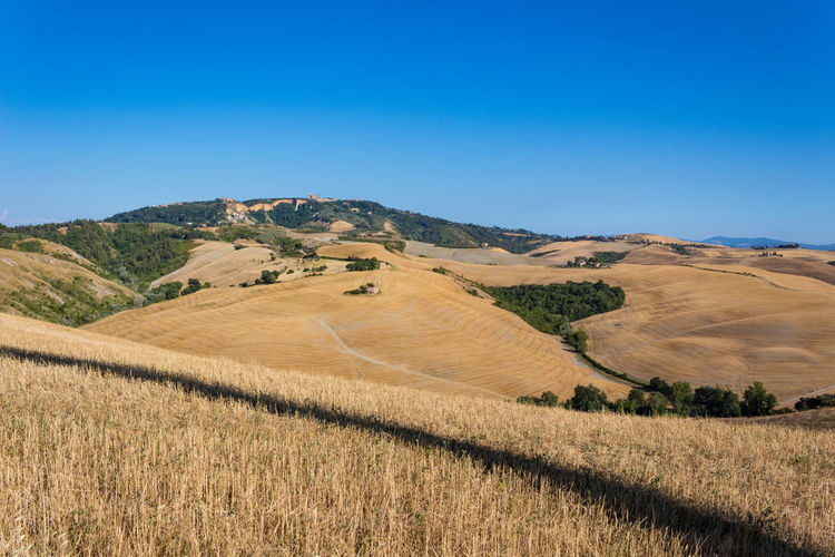 Tuscany Agriculture Beauty In Nature Blue Cereal Plant Clear Sky Countryside Day Field Landscape Nature No People Outdoors Rural Scene Scenics Sky Tranquil Scene Tranquility