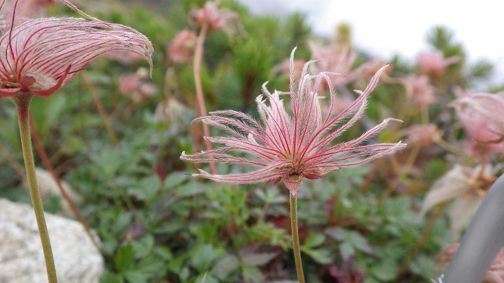 過去画から~ 去年山に登ったときに名前も知らずとったヤツ Flower Flowers Mountain Hiking