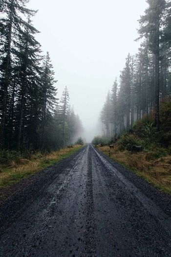 My paradise♡ ...Taking Photos Enjoying Life On A Hike Nature Trees Getting Inspired Foggy Day Forest Mountain Relaxing