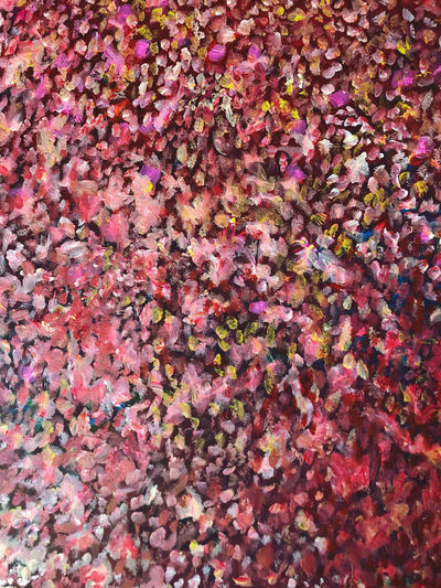 High angle view of pink flowering plants