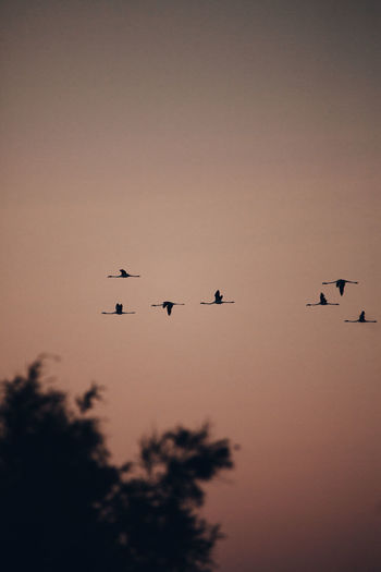 Low angle view of silhouette birds flying in sky
