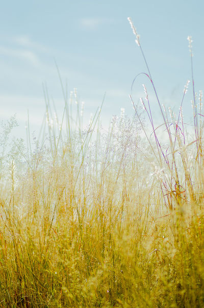 Beauty In Nature Close-up Day Field Grass Growth Nature No People Outdoors Plant Scenics Sky Tranquil Scene Tranquility