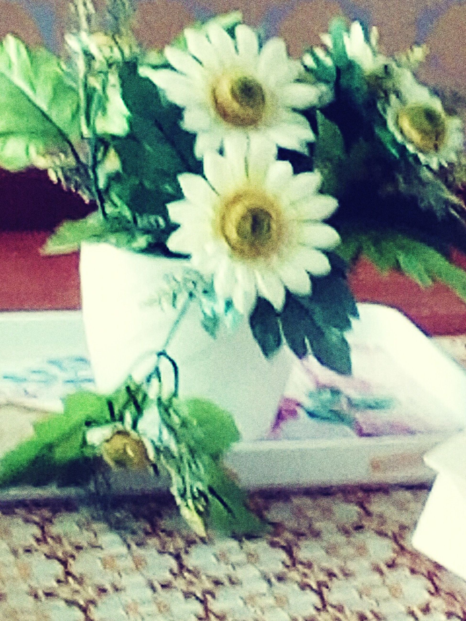 flower, indoors, freshness, high angle view, close-up, bouquet, celebration, bunch of flowers, plant, flower head, fragility, daisy, decoration, petal, flower arrangement, botany, multi colored, growth, beauty in nature, nature, creativity, celebration event