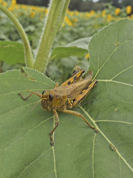 Insect Green Color Leaf Grasshopper Focus On Foreground No People Close-up Outdoors