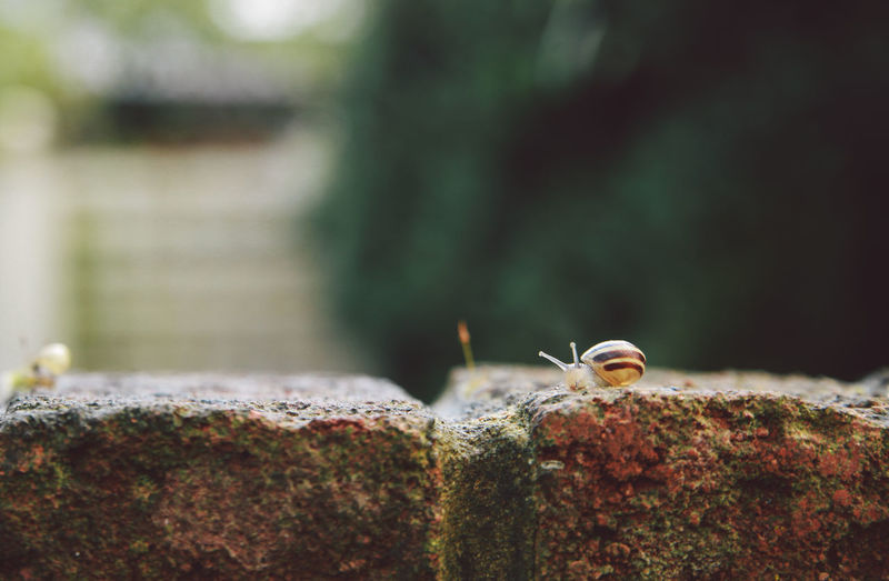 Close-Up Of Snail On Brick Wall
