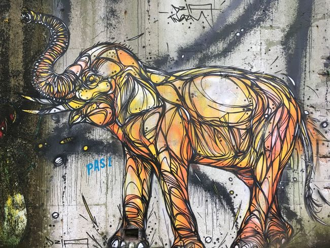 Elephant Graffiti Walls Concrete Forgotten Undiscovered Talent Beautiful