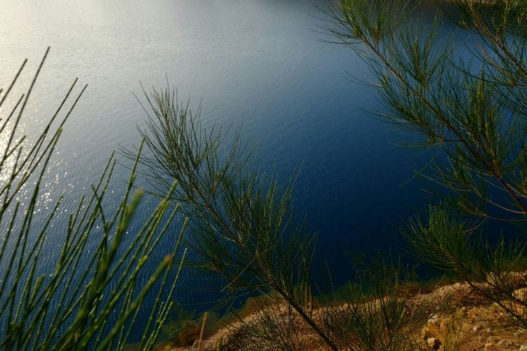 Behind the 🌲 Nature Water Lake Reflection Tranquility Beauty In Nature High Angle View Outdoors Plant Grass Scenics Tree Day EyeEmNewHere