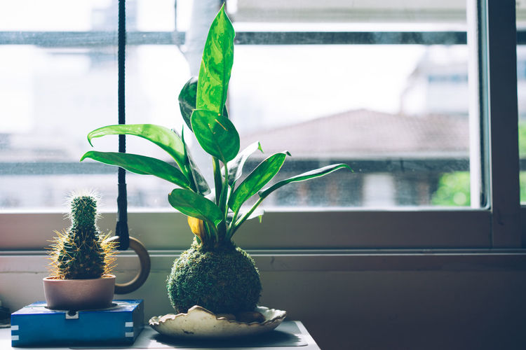 Close-up Day Flower Head Flower Pot Focus On Foreground Freshness Glass - Material Green Color Growth Home Interior Houseplant Indoors  Leaf Nature No People Plant Plant Part Potted Plant Table Transparent Window Window Frame Window Sill