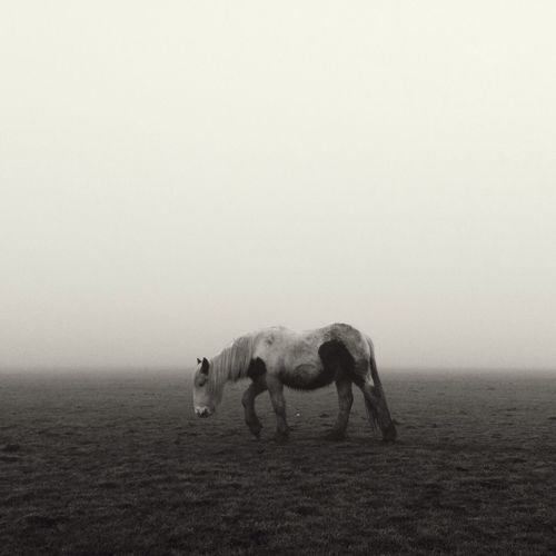 Pony in the fog AMPt_community Vscocam