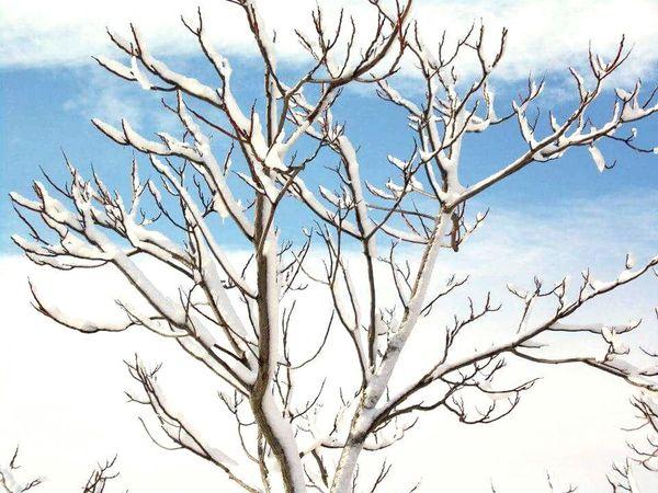 Tree No People Nature Landscape Tree Cloud - Sky Winter Snow