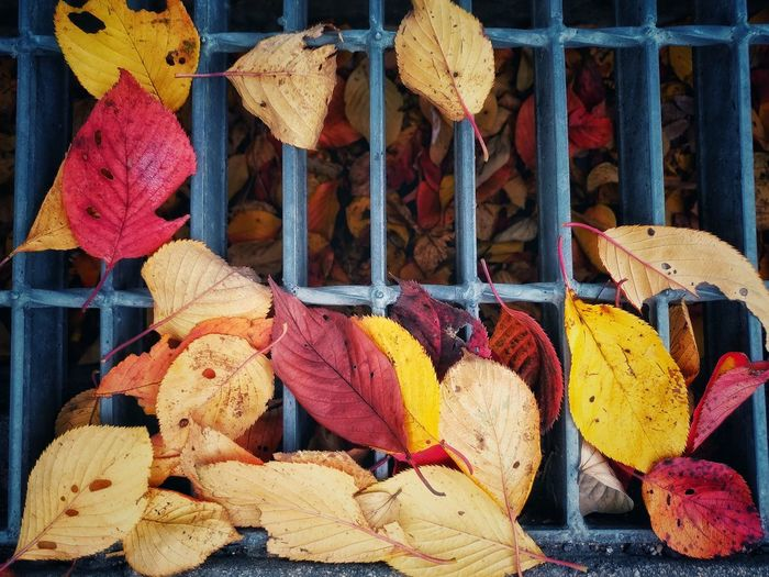 High angle view of autumn leaves on metal grate