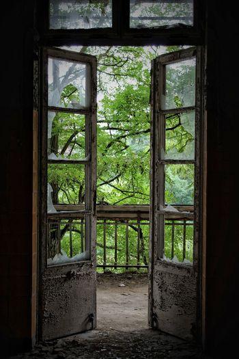 Trees seen through damaged door