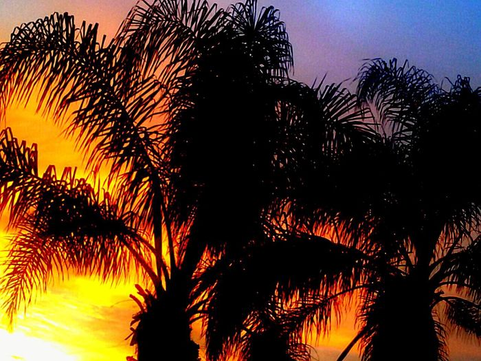 Sunrise Sunrise Silhouette Sky And Trees Treesilhouette Palm Trees Palmtrees Tree Silhouette Outside My Front Door ~ Skylove A.M. Pic