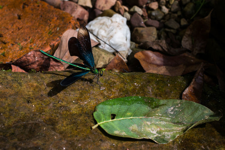 Dragonfly Animal Themes Animal Wildlife Animals In The Wild Beauty In Nature Close-up Insect Leaf Nature One Animal