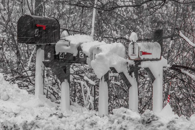 Mailboxes Winter Cold Temperature Snow Tree Nature Outdoors Day
