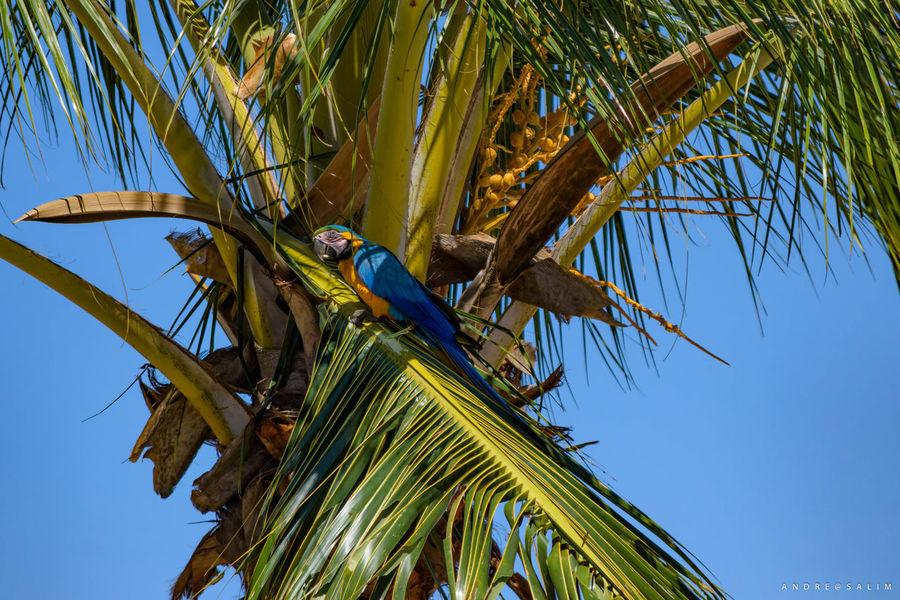 Pássaros no dia a dia Animal Themes Araraazul Bird Day Nature No People Outdoors Sky Blue