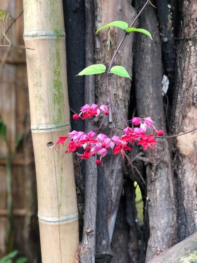 Flor und Fauna