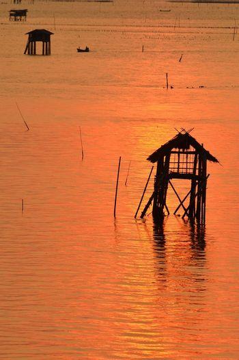 Silhouette bird in sea against orange sky