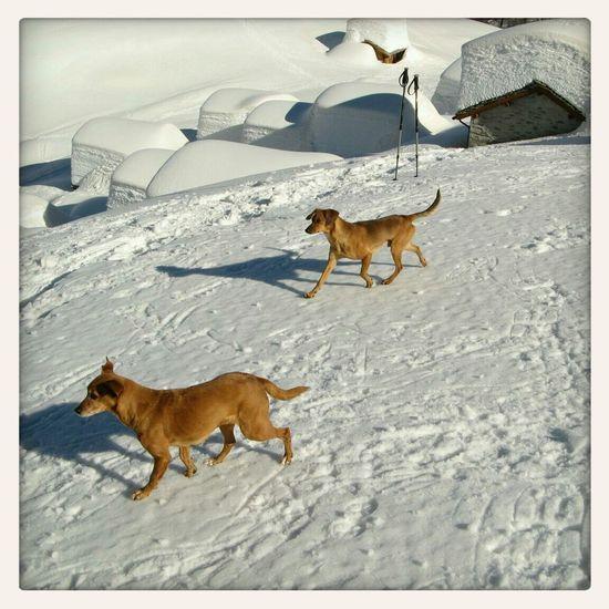 Dog Snow Mountain Contrasti Lendine - Valchiavenna. Inverno 2013