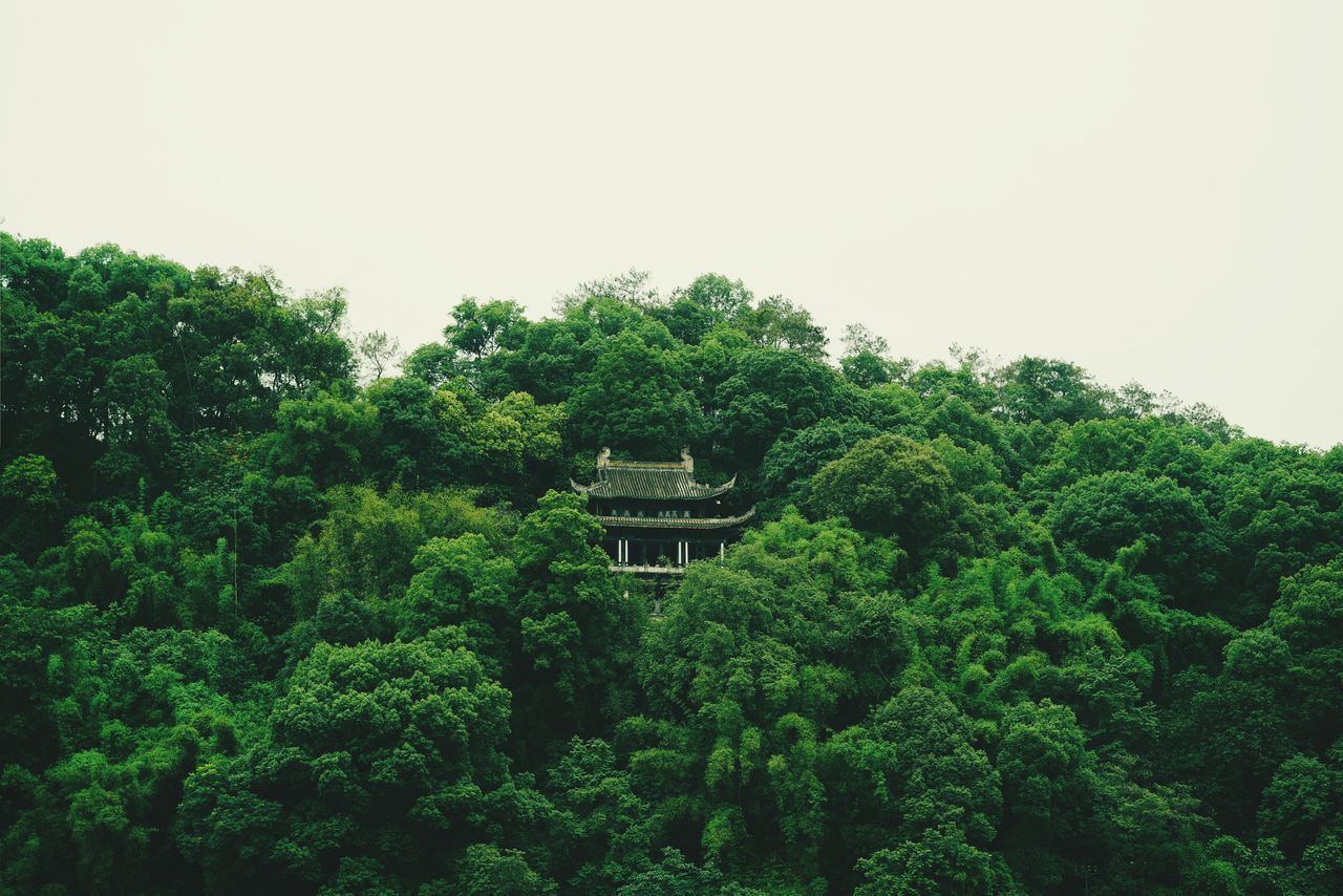 plant, tree, growth, green color, sky, architecture, nature, built structure, foliage, lush foliage, no people, beauty in nature, day, outdoors, copy space, clear sky, building exterior, garden, green, tranquility