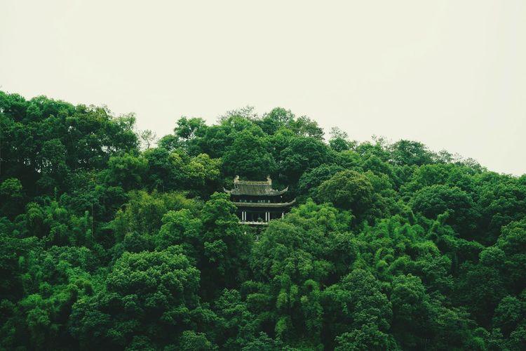 四川·乐山 乐山 中国 四川