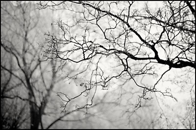 Bare Tree Beauty In Nature Branch Close-up Day Fog Nature No People Outdoors Sky Tree