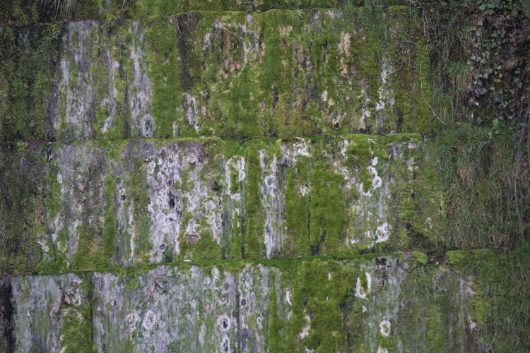 Backgrounds Close-up Day Full Frame Green Color Moss Nature No People Outdoors Stone Wall Textured  Weathered