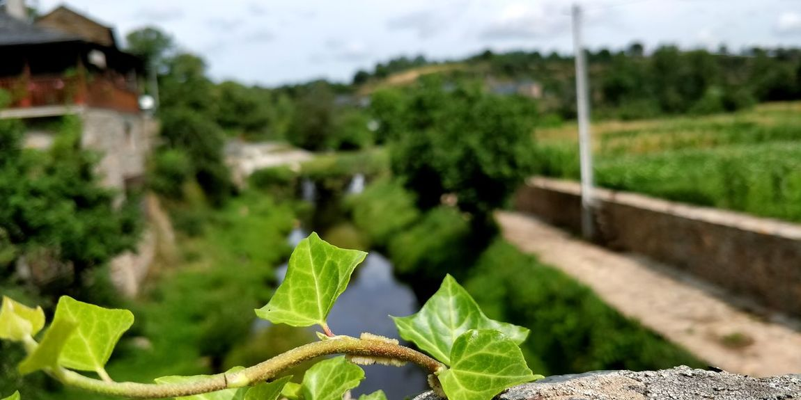 Río de Onor 2 River Riverside Tree Prickly Pear Cactus Rural Scene Agriculture Leaf Sky Close-up Plant Green Color Vegetable Garden Homegrown Produce Organic Farm Harvesting